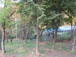 2018타경103540 - 서울중앙 [임야] 서울특별시 강남구 율현동 산21-3 - 부동산미래