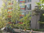 2017타경3932 - 서울북부 [아파트] 서울특별시 노원구 월계동 382-15 새봄아파트 2층206호 - 부동산미래