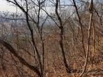 2018타경29827 - 인천지법 [임야] 인천광역시 중구 운서동 산1-6 - 부동산미래