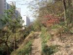 2018타경23819 - 수원지법 [임야] 경기도 용인시 수지구 신봉동 산25-4 - 부동산미래