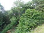 2018타경507393 - 수원지법 [임야] 경기도 용인시 처인구 고림동 산28-20 - 부동산미래