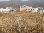 2019타경27399 - 수원지법 [도로] 경기도 용인시 수지구 동천동 597-2 - 부동산미래