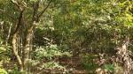 2019타경8431 - 여주지원 [임야] 경기도 이천시 사음동 산3 - (주)조은인연법률경매