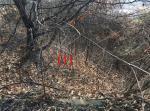 2019타경10625 - 여주지원 [임야] 경기도 양평군 양동면 단석리 221-11 - 부동산미래