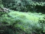 2020타경5490 - 여주지원 [임야] 경기도 양평군 청운면 가현리 산21 - 부동산미래