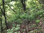 2018타경1079 - 제천지원 [전] 충청북도 단양군 어상천면 연곡리 181-12 - 부동산미래