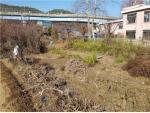 2018타경17136 - 대전지법 [대지] 세종특별자치시 조치원읍 신안리 244-12 - 부동산미래