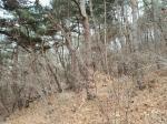 2019타경111790 - 대전지법 [임야] 대전광역시 서구 산직동 산2-1 - 부동산미래
