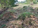 2019타경18009 - 홍성지원 [임야] 충청남도 보령시 청소면 장곡리 산20-2 - 부동산미래