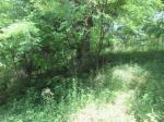 2020타경1099 - 상주지원 [임야] 경상북도 예천군 개포면 장송리 산37-3 - 믿음경매