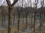 2018타경10888 - 의성지원 [답] 경상북도 청송군 청송읍 금곡리 995 - 부동산미래