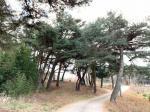 2018타경2385 - 영덕지원 [대지] 경상북도 울진군 죽변면 화성리 277 - (주)원앤원플러스부동산중개법인