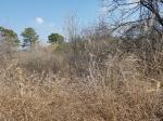 2020타경351 - 영덕지원 [전] 경상북도 영양군 입암면 삼산리 300 - 부동산미래