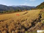 2018타경4960 - 대구서부 [답] 대구광역시 달성군 가창면 삼산리 613 - 부동산미래
