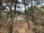 2019타경7287 - 대구서부 [임야] 경상북도 성주군 초전면 용봉리 산101-1 - 부동산미래