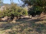 2018타경1218 - 통영지원 [임야] 경상남도 거제시 사등면 오량리 산114-7 - 파란법원경매