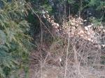 2018타경13570 - 통영지원 [전] 경상남도 거제시 장목면 송진포리 547 - (주)원앤원플러스부동산중개법인