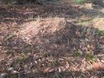 2019타경10137 - 밀양지원 [과수원] 경상남도 밀양시 삼랑진읍 삼랑리 147-4 - 대한법률부동산연구소