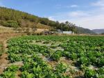 2019타경3455 - 해남지원 [전] 전라남도 해남군 화원면 인지리 577 - 믿음경매