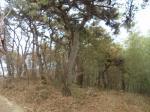 2019타경38135 - 전주지법 [임야] 전라북도 임실군 성수면 삼봉리 산66-2 - 부동산미래