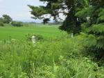 2019타경2354 - 정읍지원 [임야] 전라북도 정읍시 고부면 덕안리 산15-5 - 부동산미래