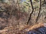 2019타경32874 - 정읍지원 [임야] 전라북도 정읍시 감곡면 통석리 산155-3 - (주)원앤원플러스부동산중개법인